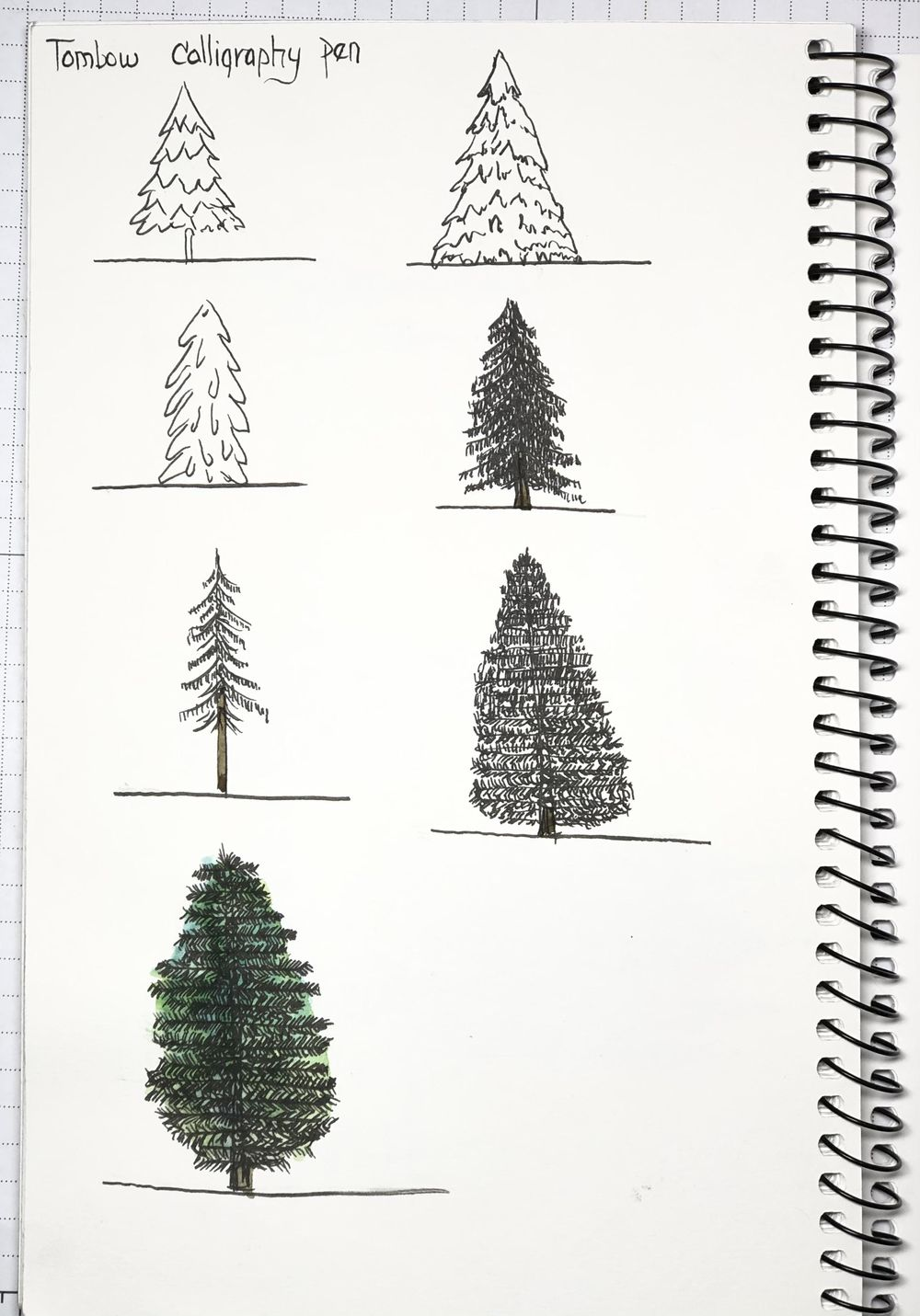 Drawing Basic Evergreens - image 1 - student project