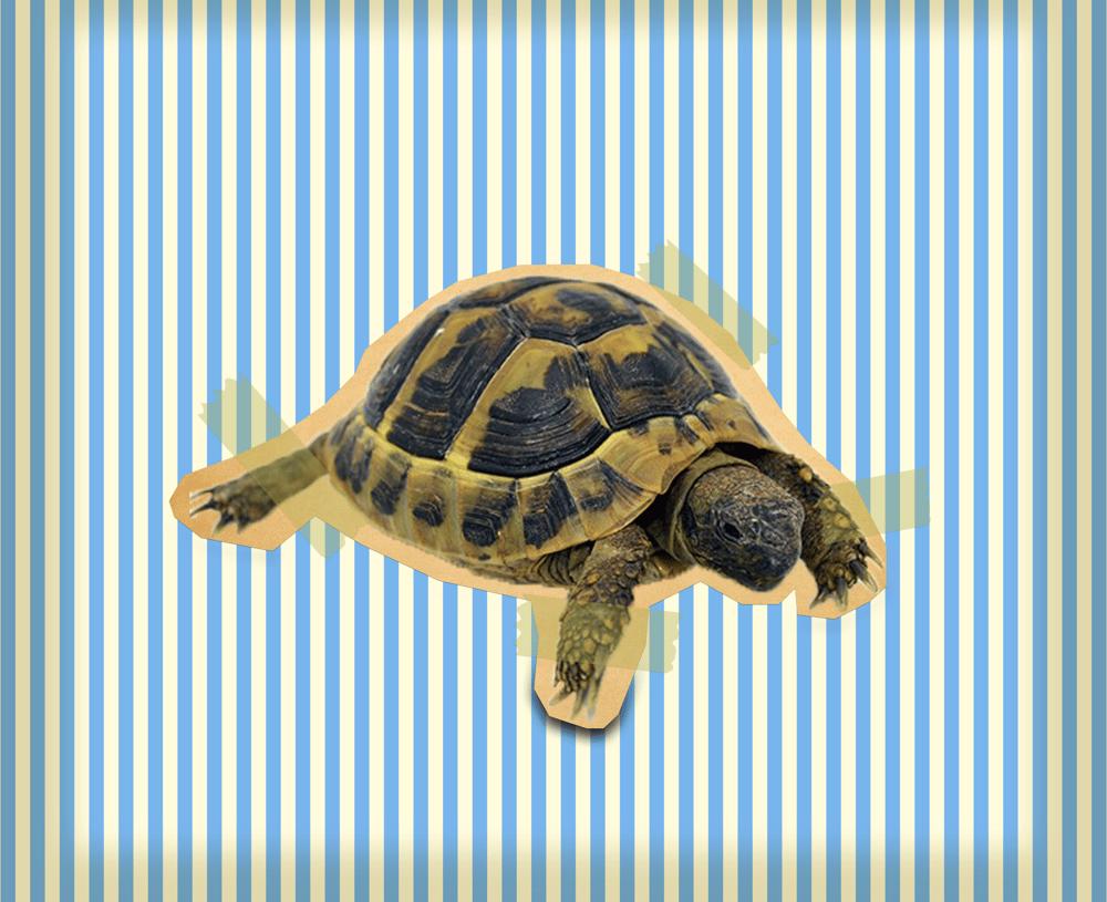 Vintage Turtle - image 1 - student project