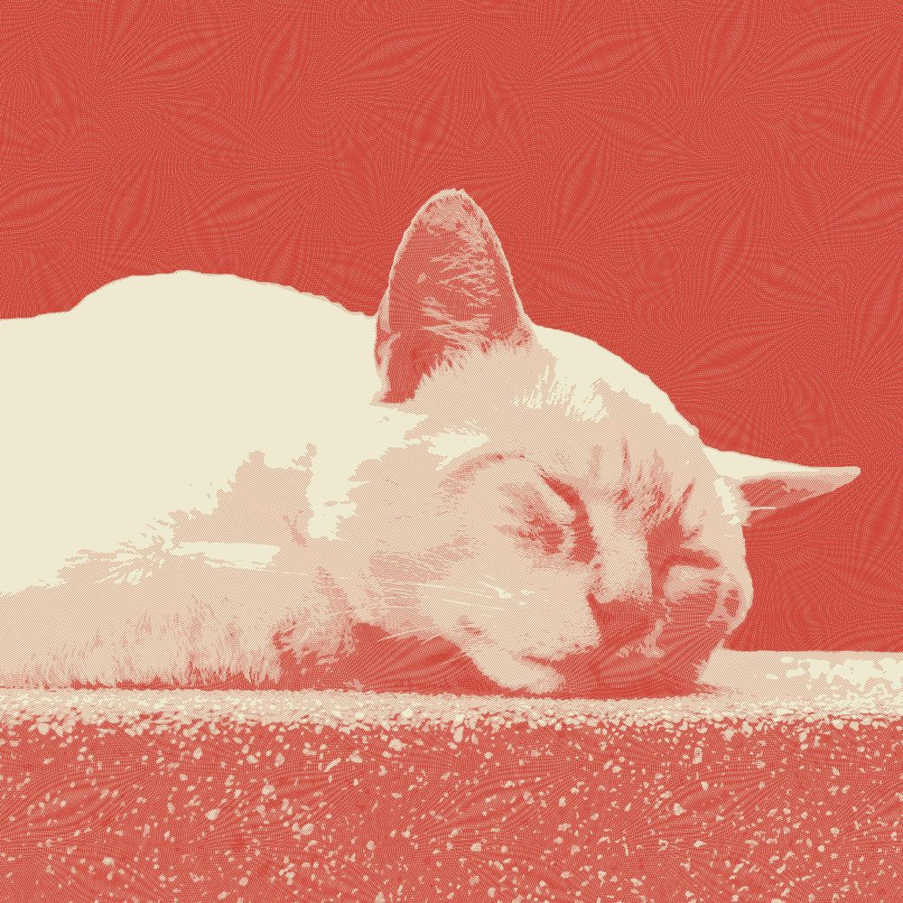 Cat Engraving - image 2 - student project