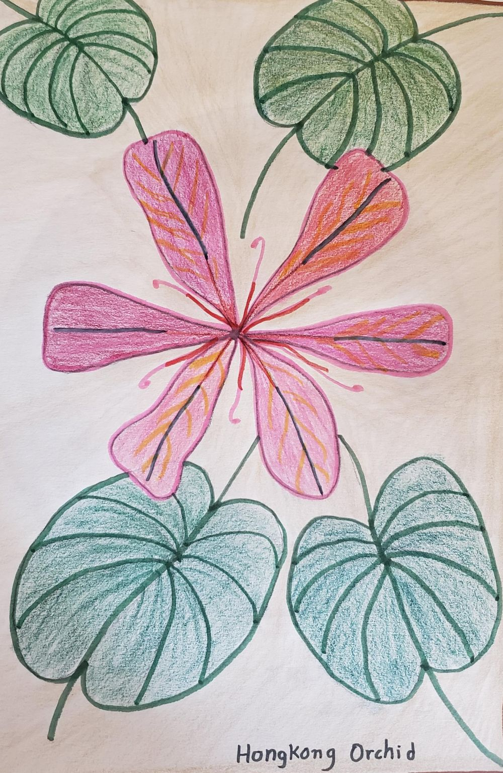 7 day nature journal - image 1 - student project