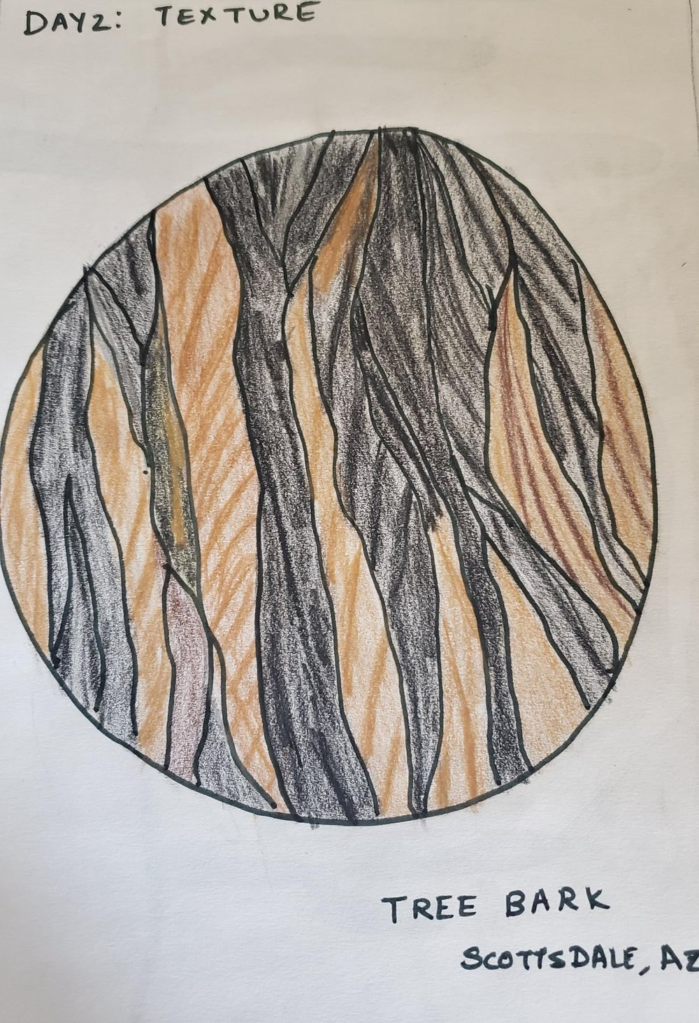 7 day nature journal - image 2 - student project
