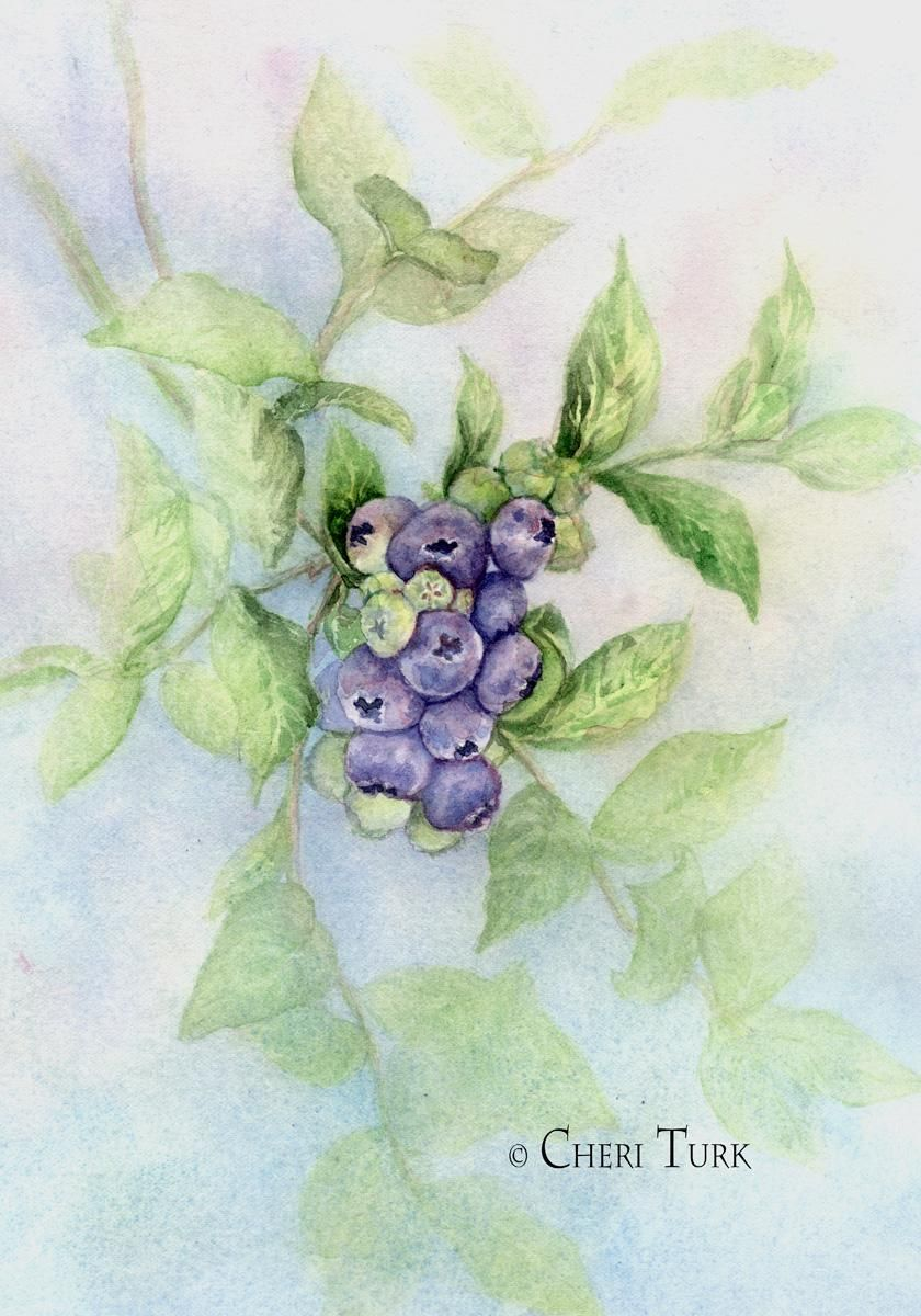 Blueberries in the Summer - image 2 - student project