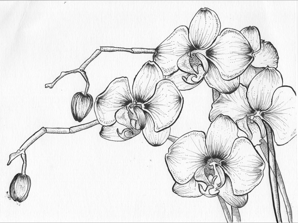Pen & Ink Irises - image 3 - student project