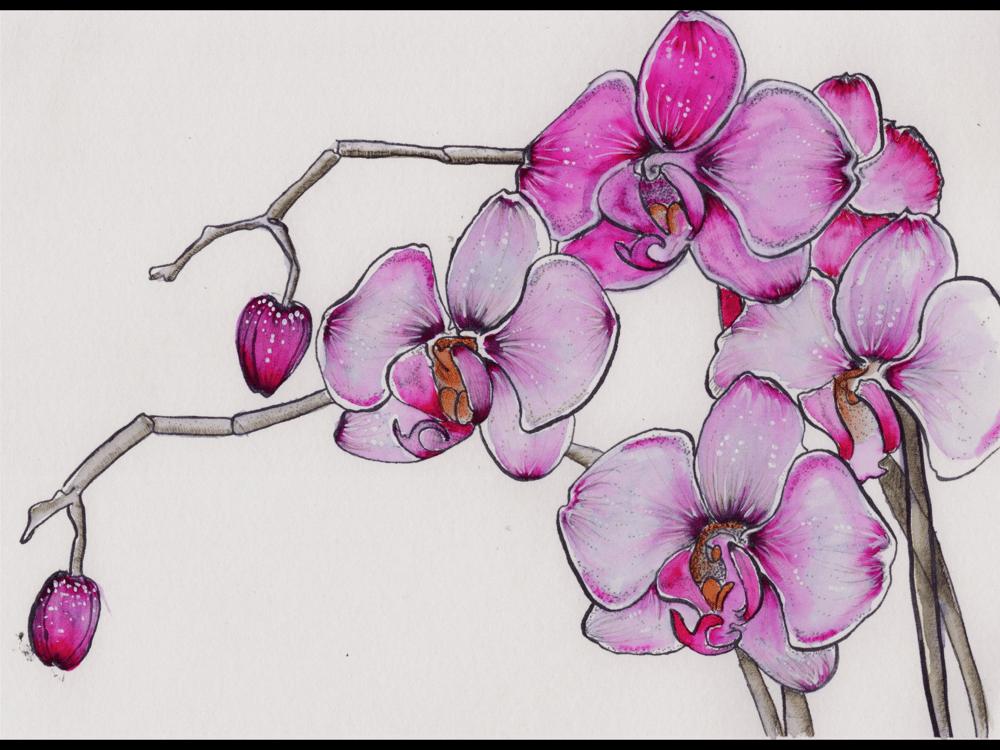 Pen & Ink Irises - image 4 - student project