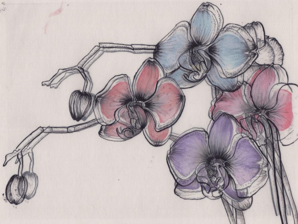 Pen & Ink Irises - image 6 - student project