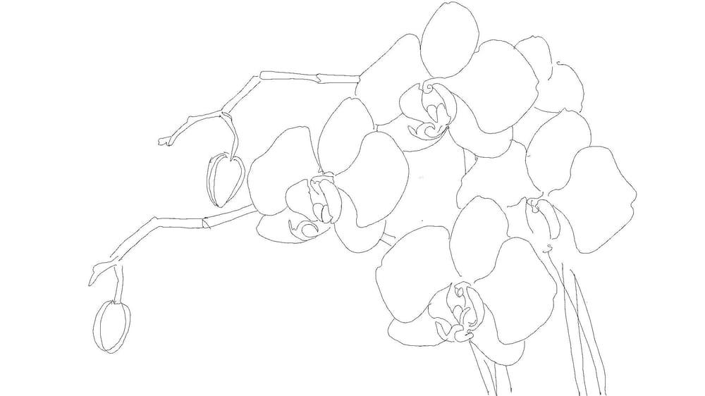 Pen & Ink Irises - image 1 - student project