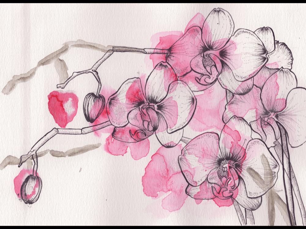 Pen & Ink Irises - image 5 - student project