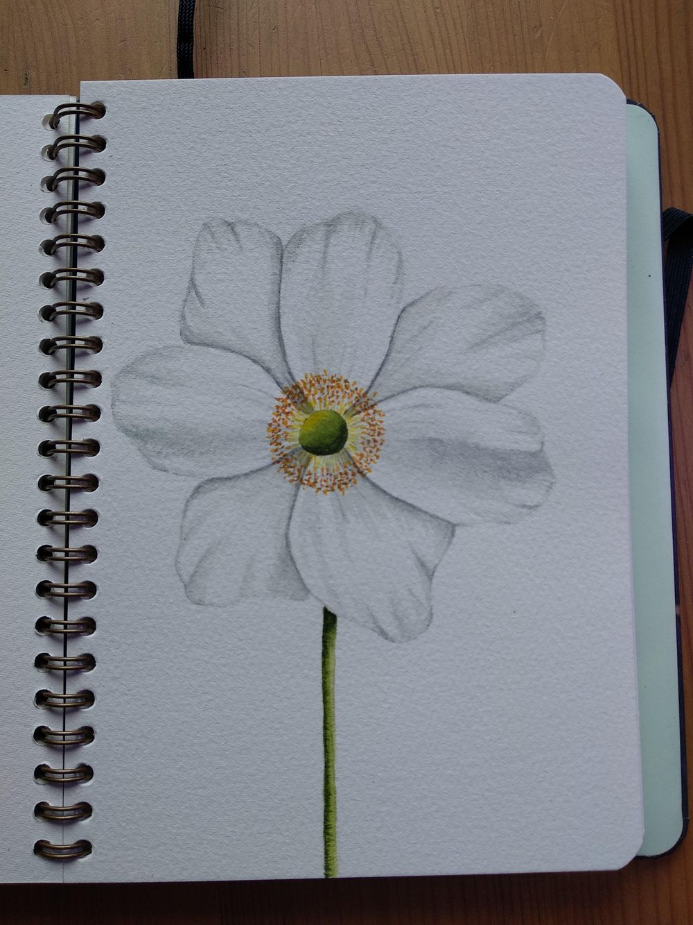 White flowers - image 2 - student project