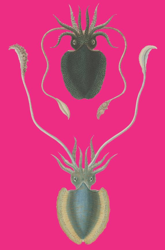 Cornelius Calamaris - image 1 - student project