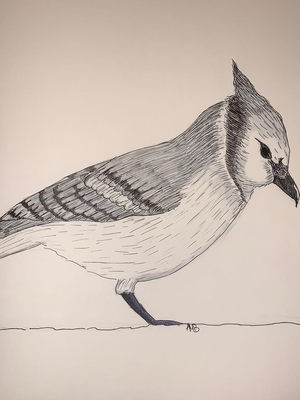 Lesson 3 Part A: Feathers - image 1 - student project