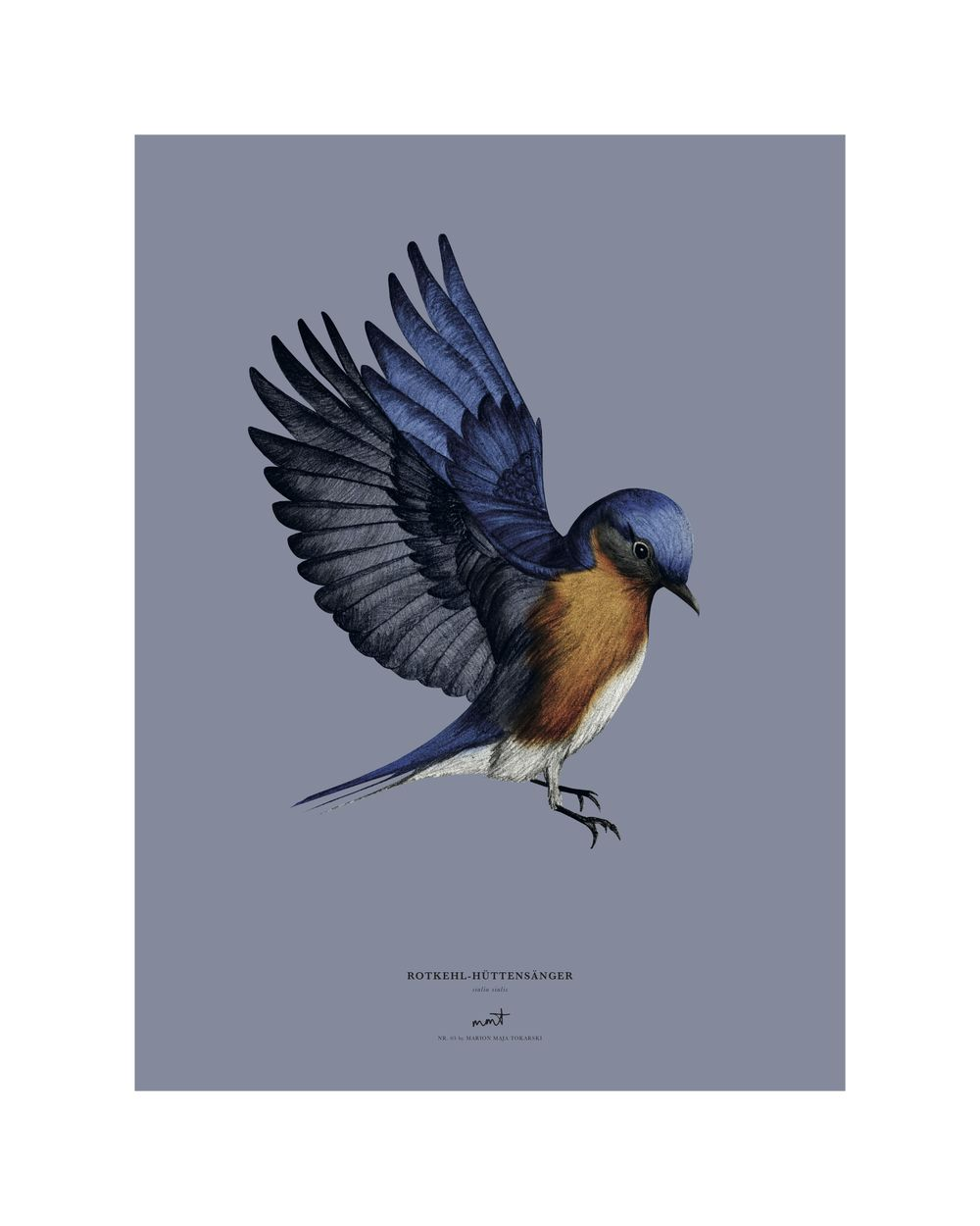 Birds - image 3 - student project