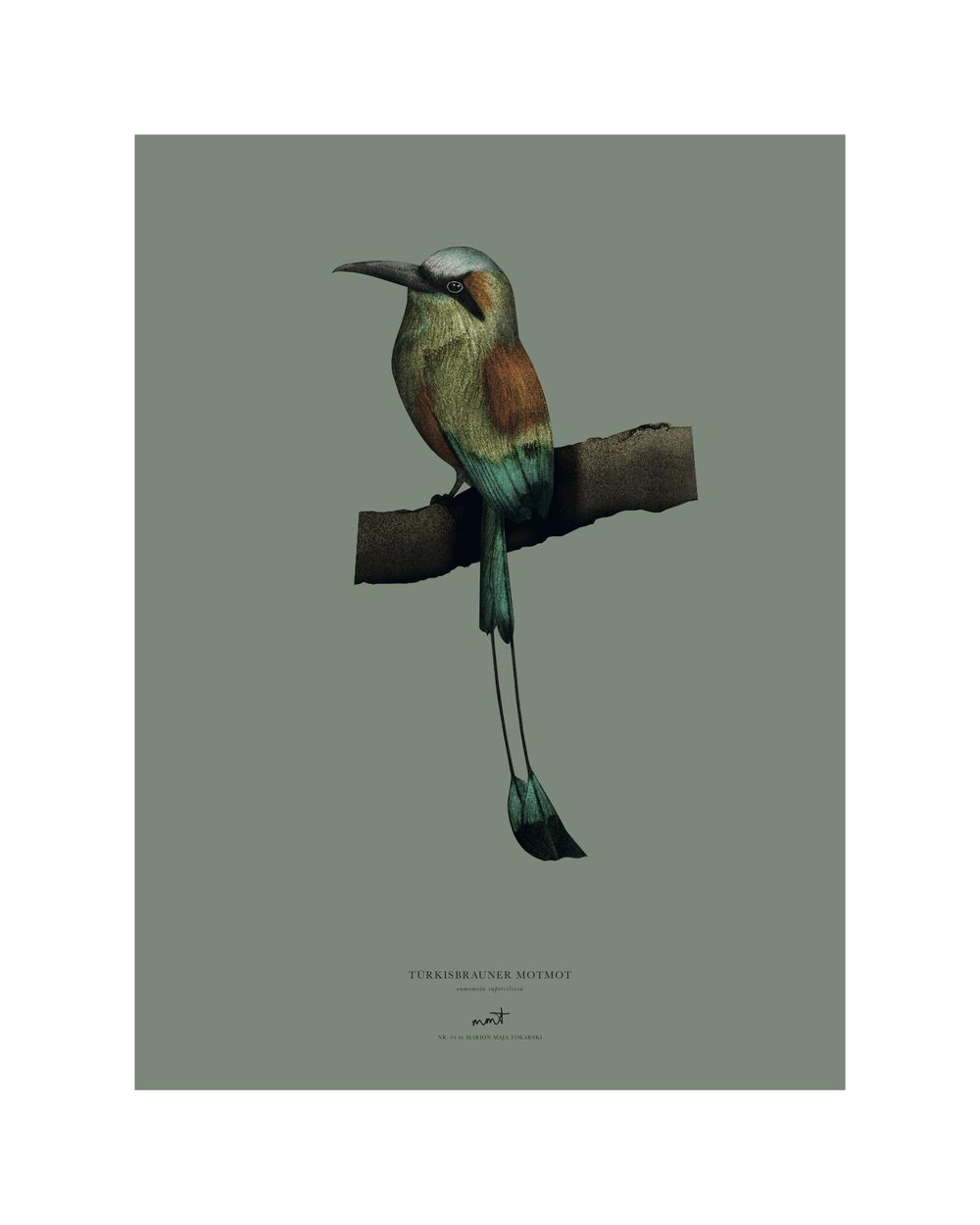 Birds - image 4 - student project