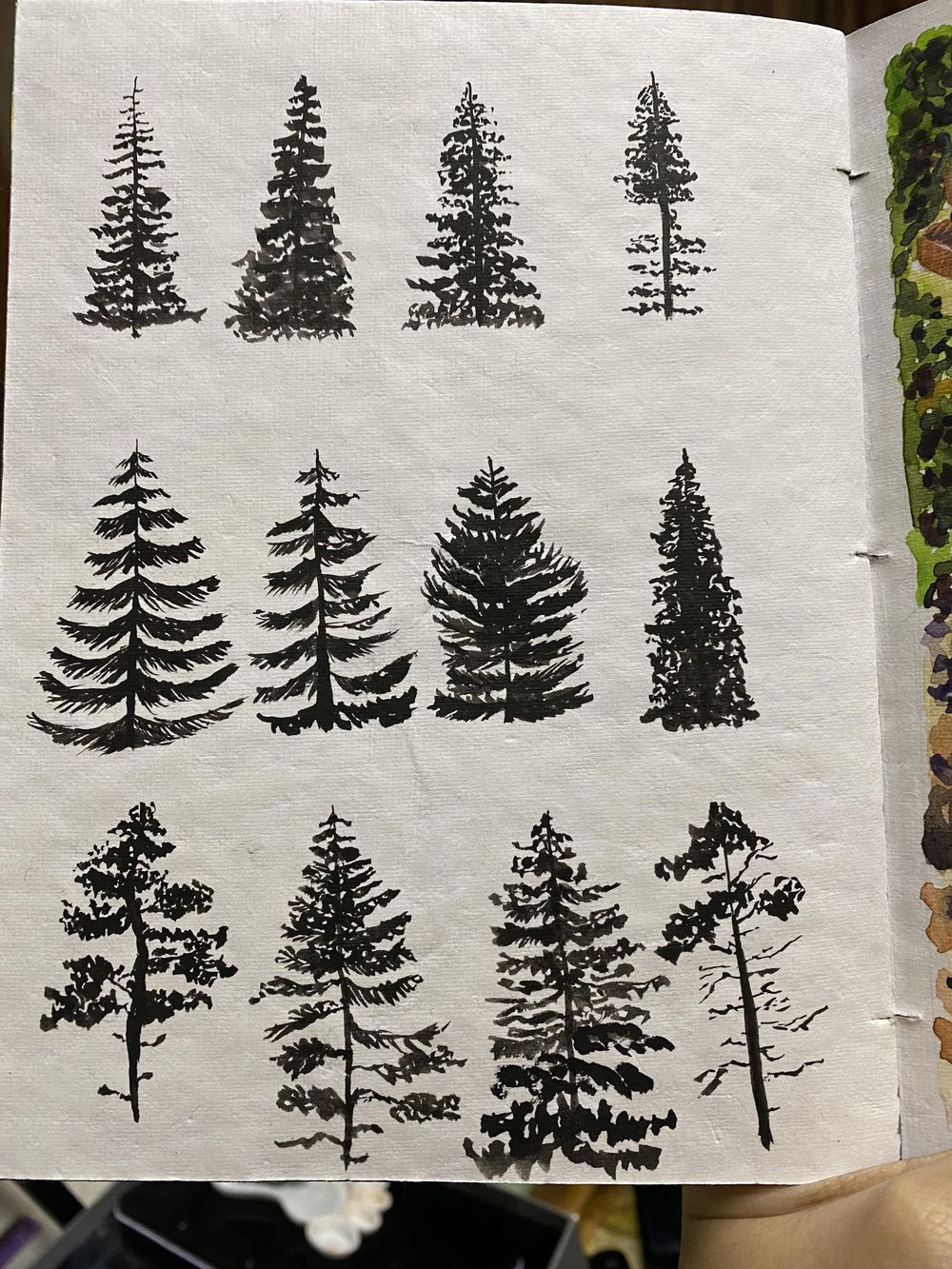 12 Pine Trees - image 2 - student project