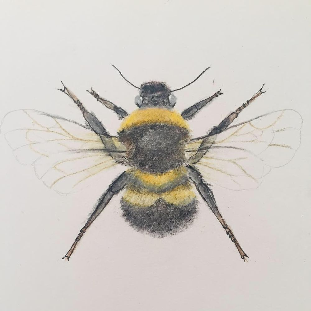 Bumble bee - image 3 - student project