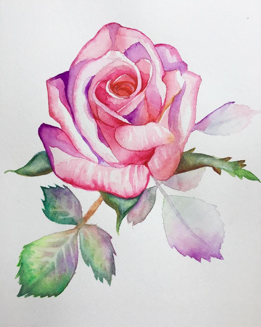 Pink rose - image 2 - student project