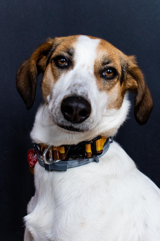 Pet Portraits: Gidget - image 1 - student project