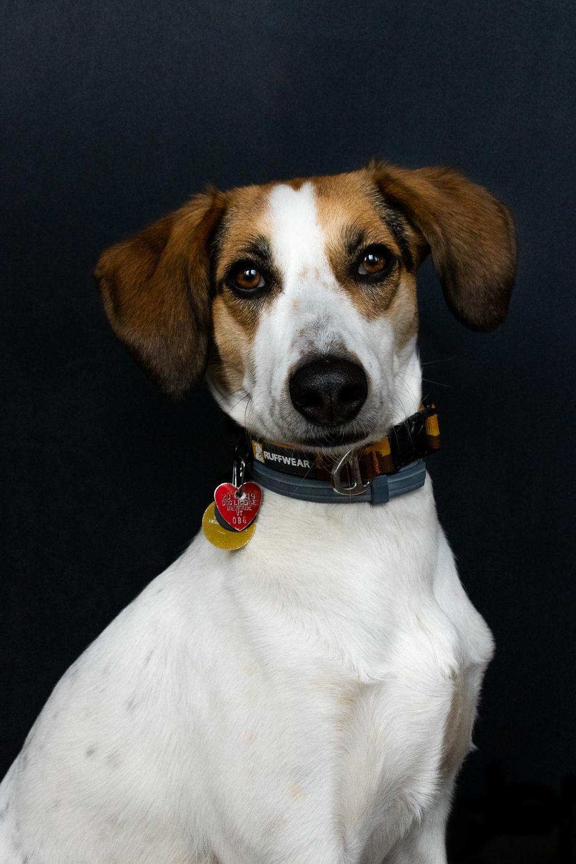 Pet Portraits: Gidget - image 4 - student project
