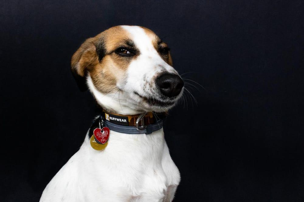 Pet Portraits: Gidget - image 2 - student project