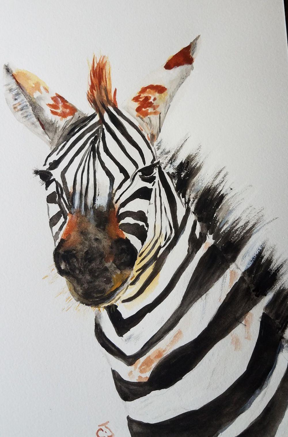 zebra - image 1 - student project