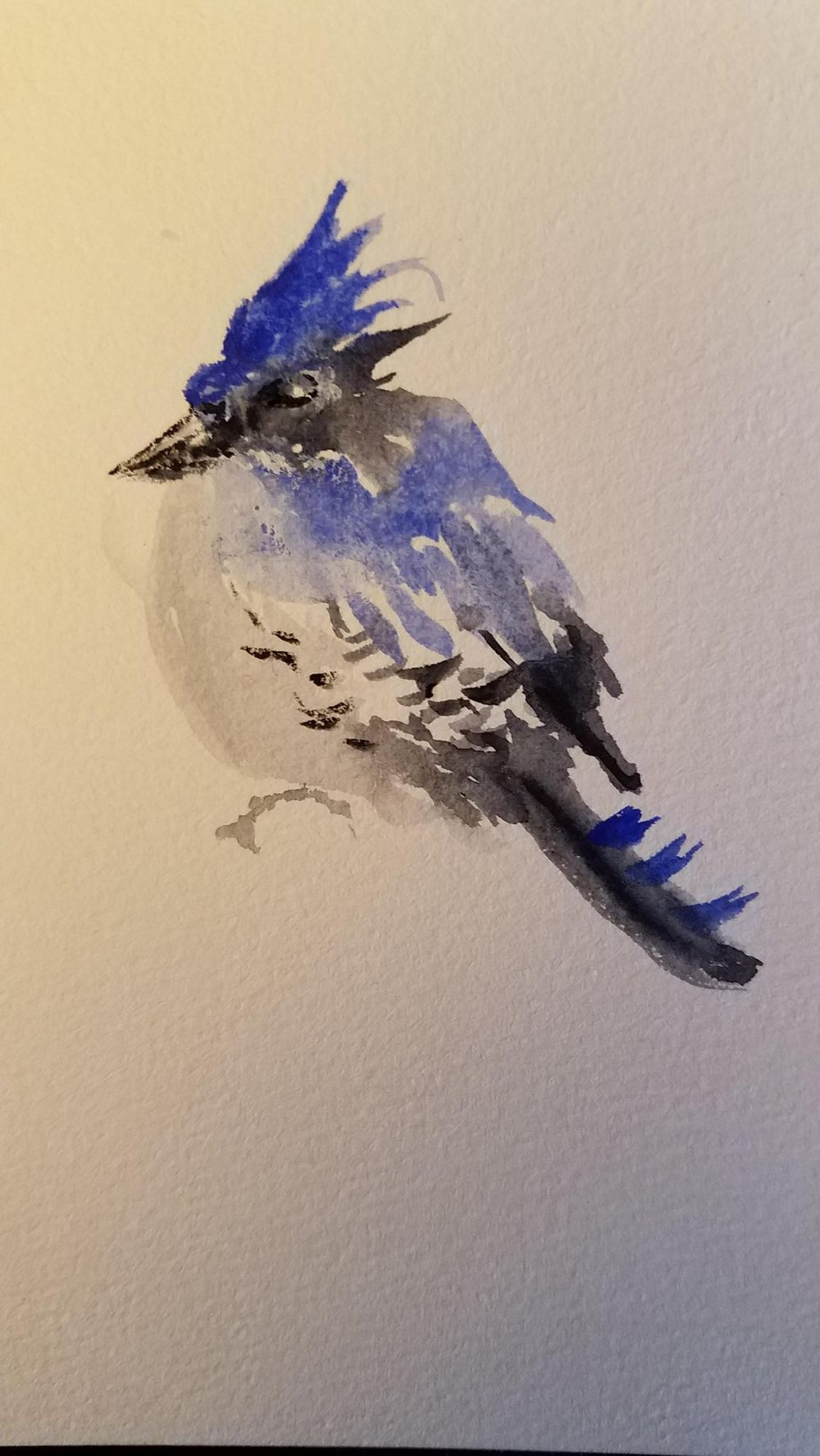 bluejay - image 1 - student project
