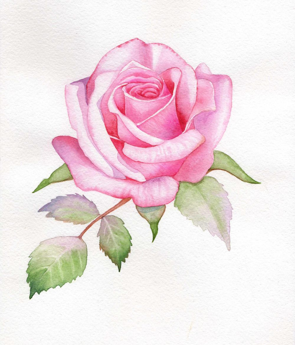 Watercolor Rose - image 1 - student project
