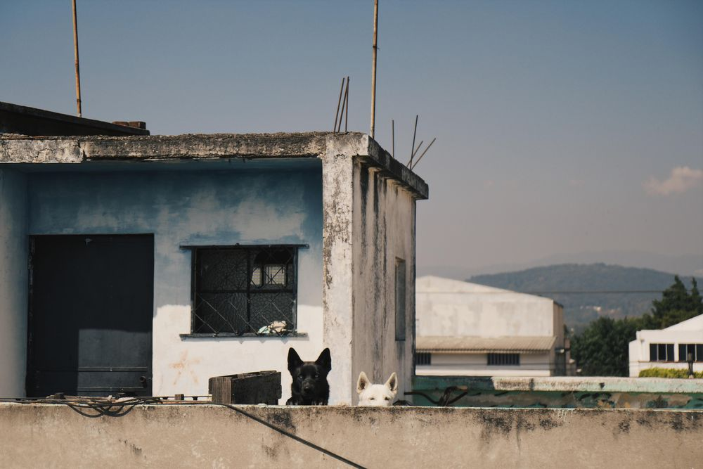 Dogs. - image 1 - student project