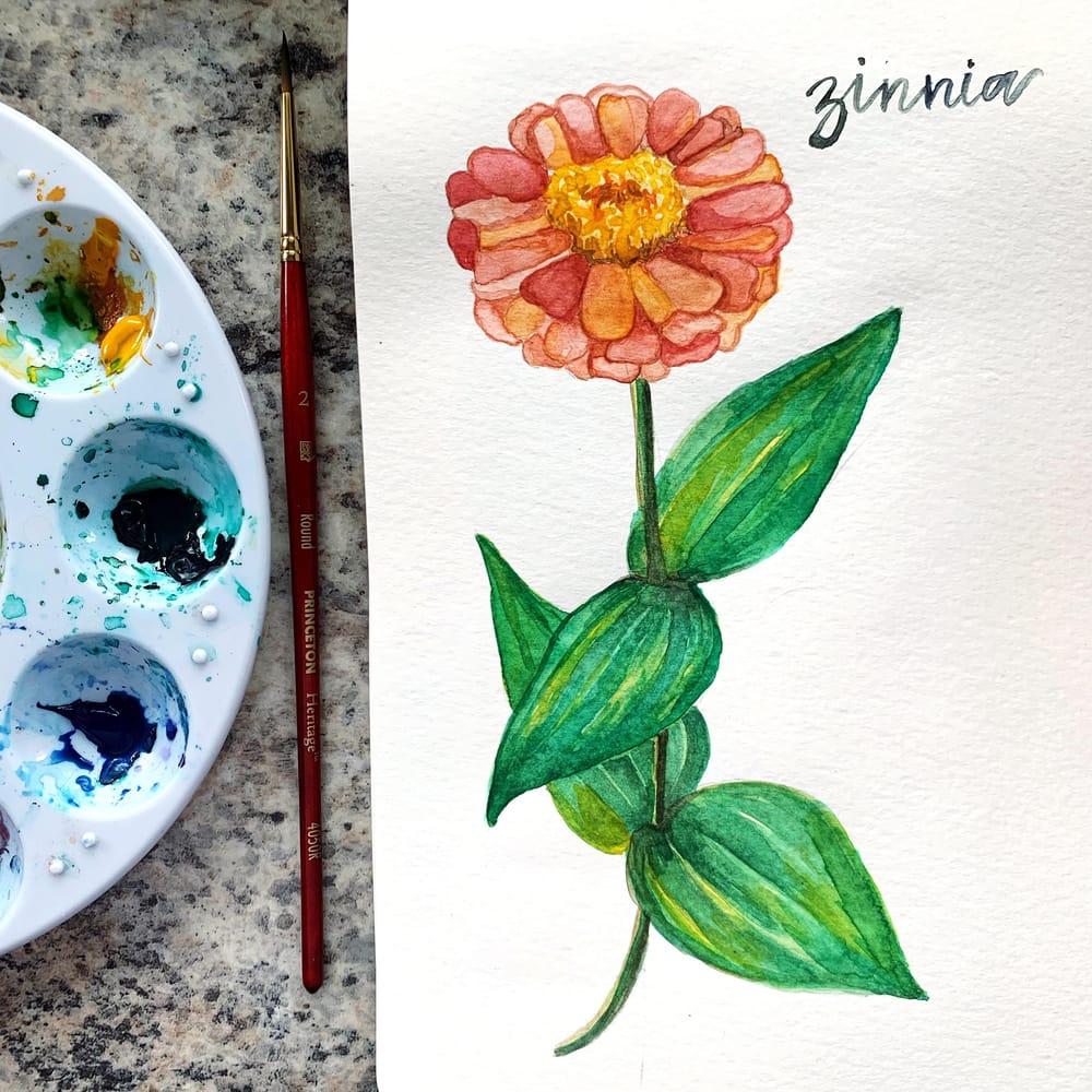 Watercolour Zinnia - image 1 - student project