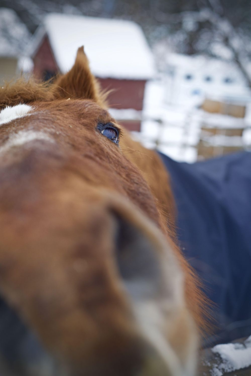 Horsing Around - image 1 - student project