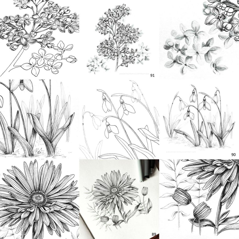 100 day of inking - Botanical illustrations - image 4 - student project
