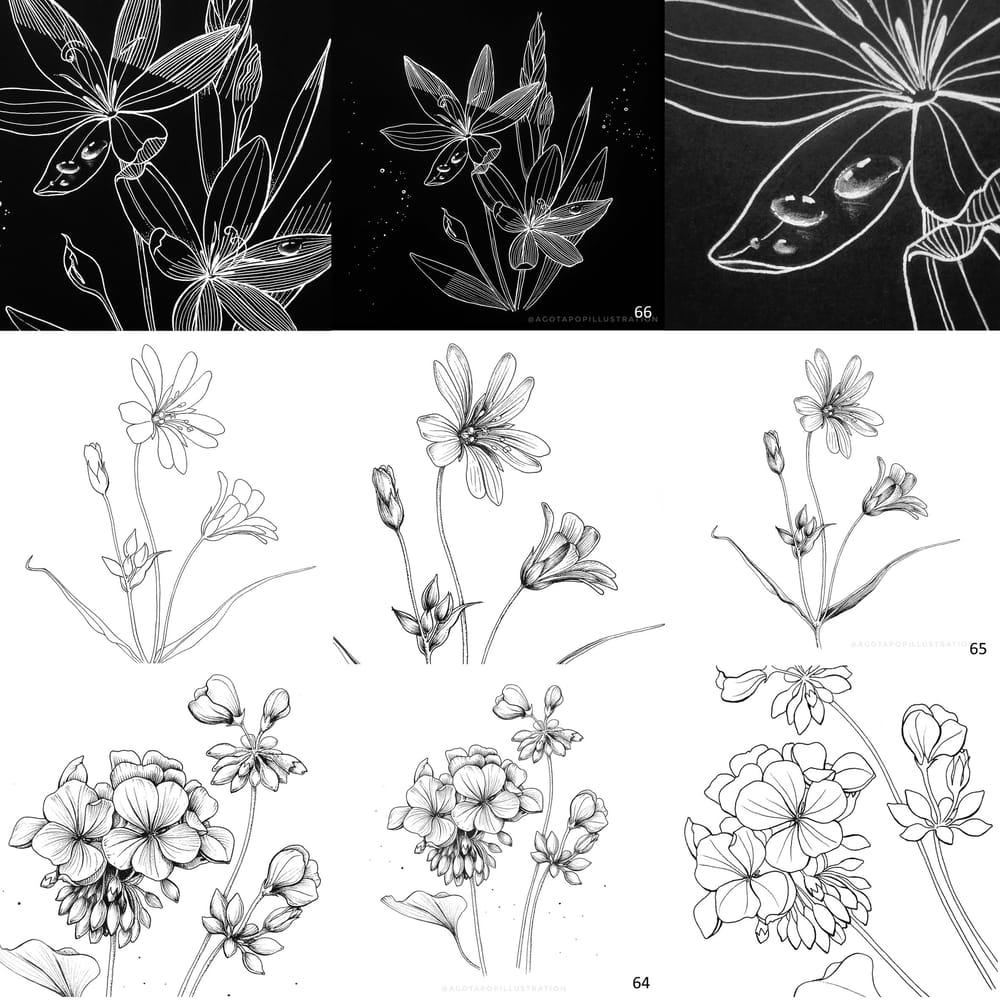 100 day of inking - Botanical illustrations - image 12 - student project