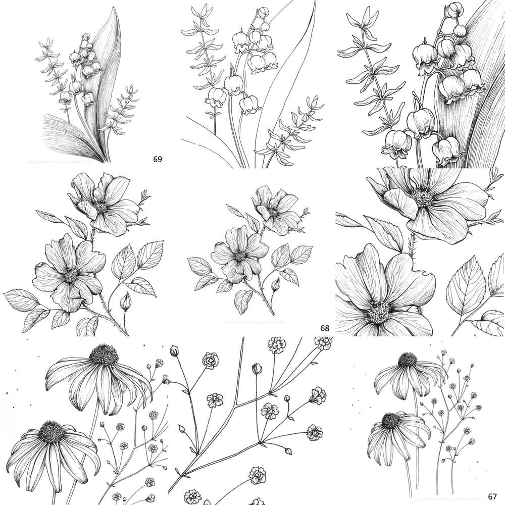 100 day of inking - Botanical illustrations - image 11 - student project