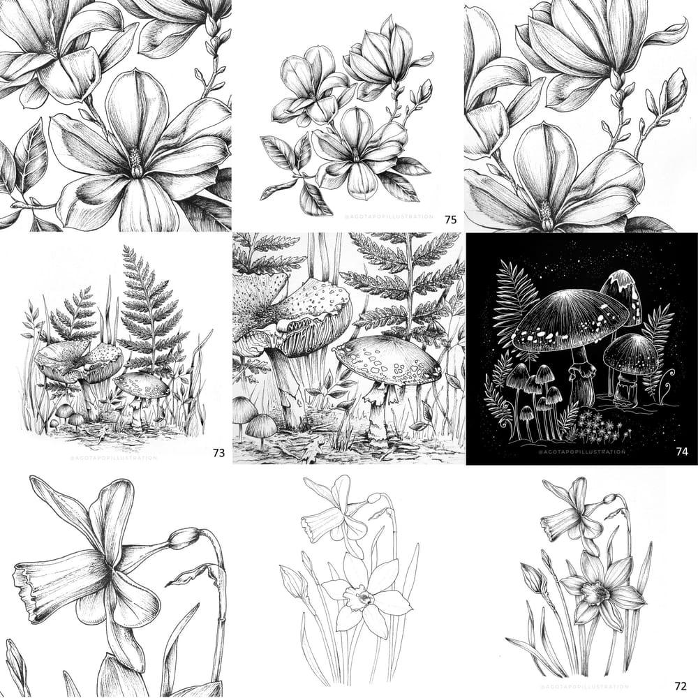 100 day of inking - Botanical illustrations - image 9 - student project