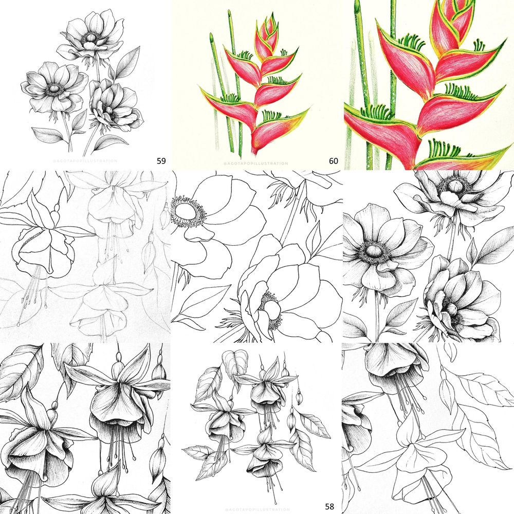 100 day of inking - Botanical illustrations - image 14 - student project