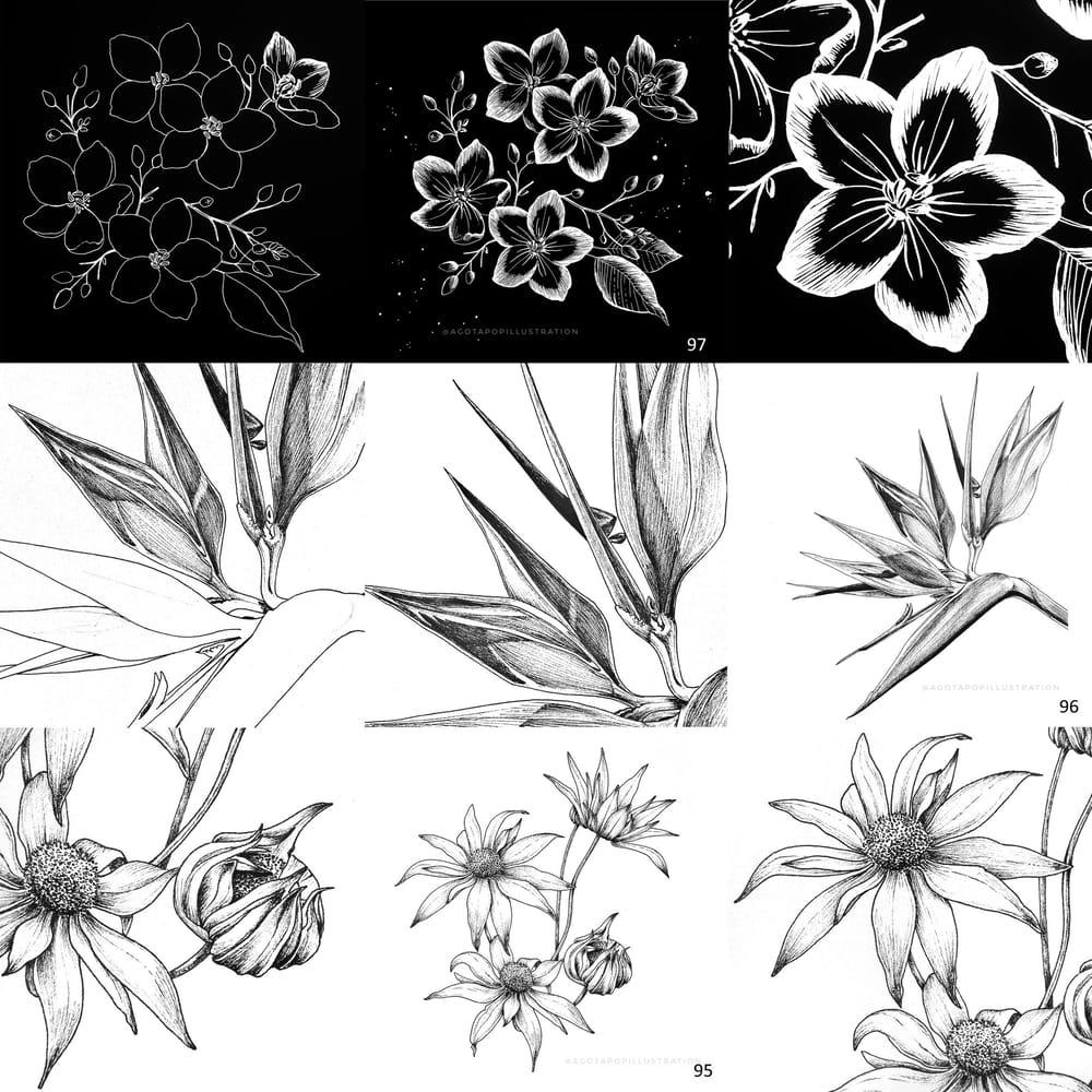 100 day of inking - Botanical illustrations - image 2 - student project