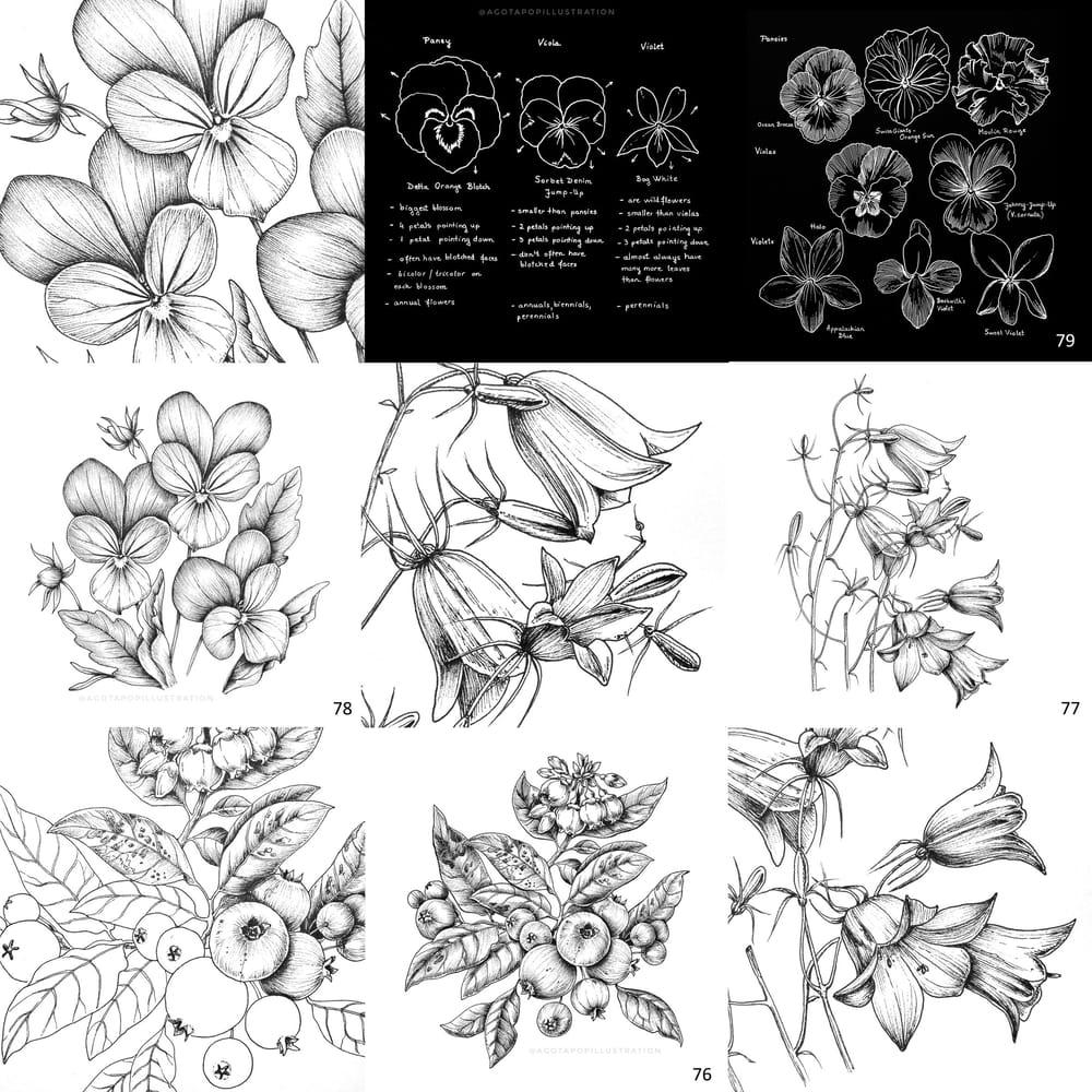 100 day of inking - Botanical illustrations - image 8 - student project