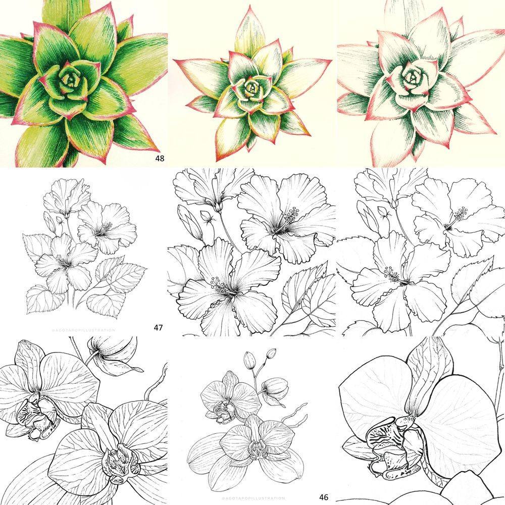 100 day of inking - Botanical illustrations - image 18 - student project
