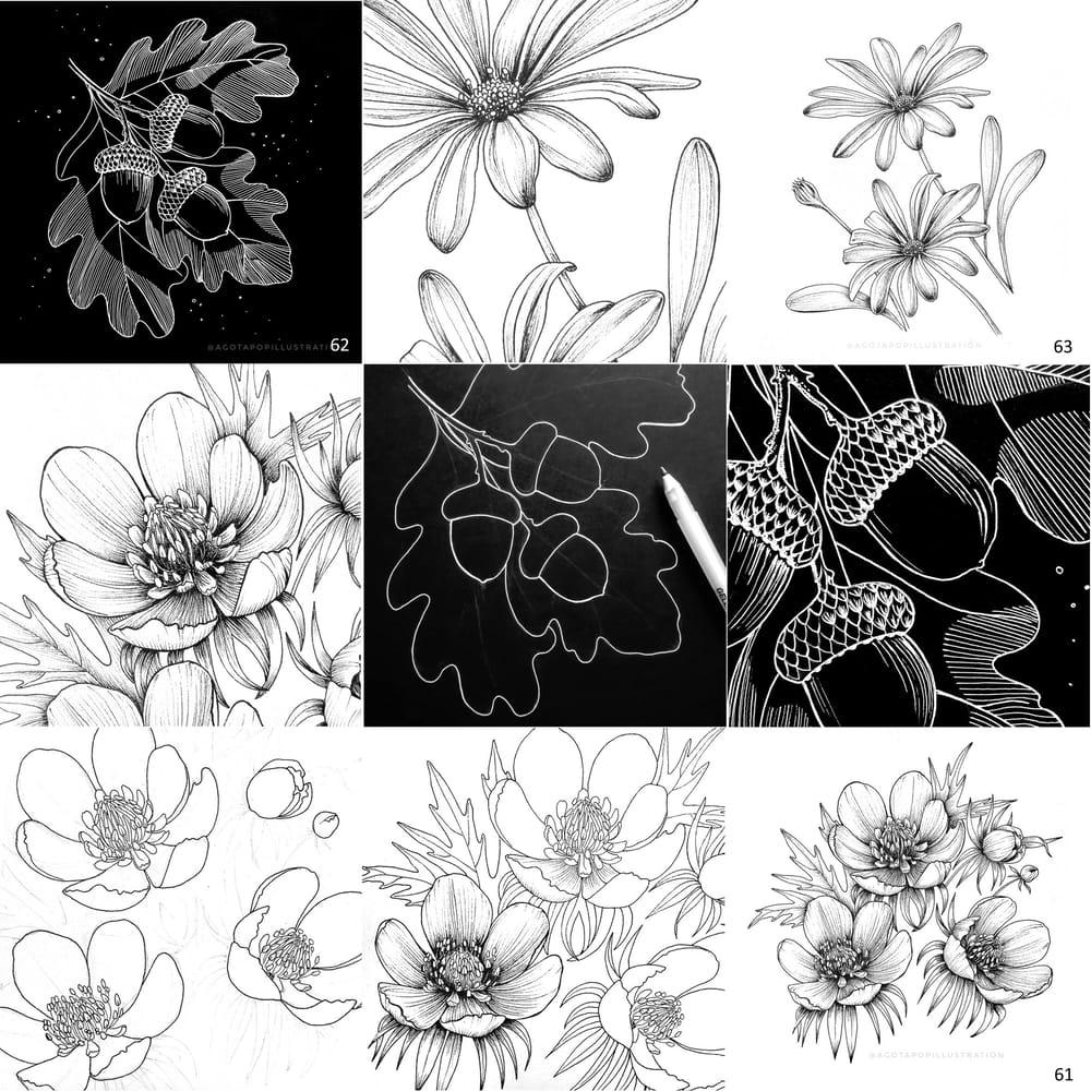 100 day of inking - Botanical illustrations - image 13 - student project