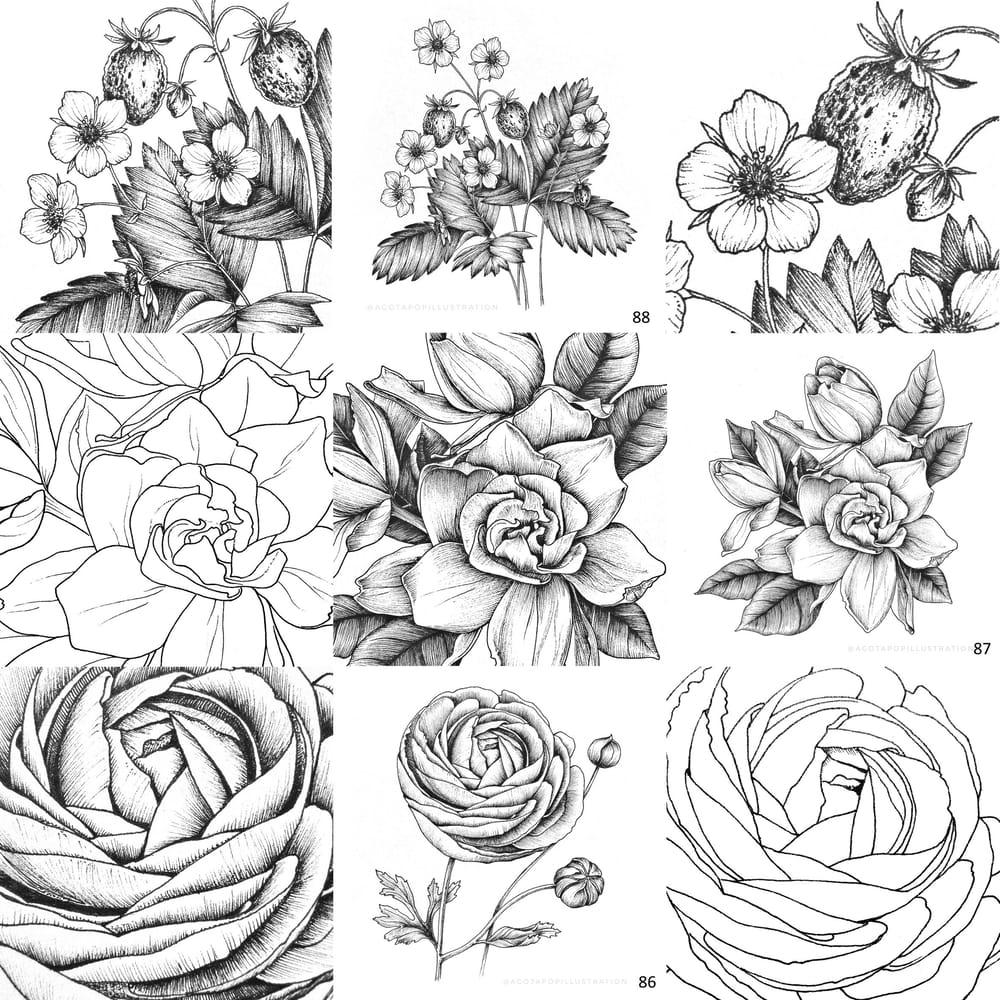 100 day of inking - Botanical illustrations - image 5 - student project