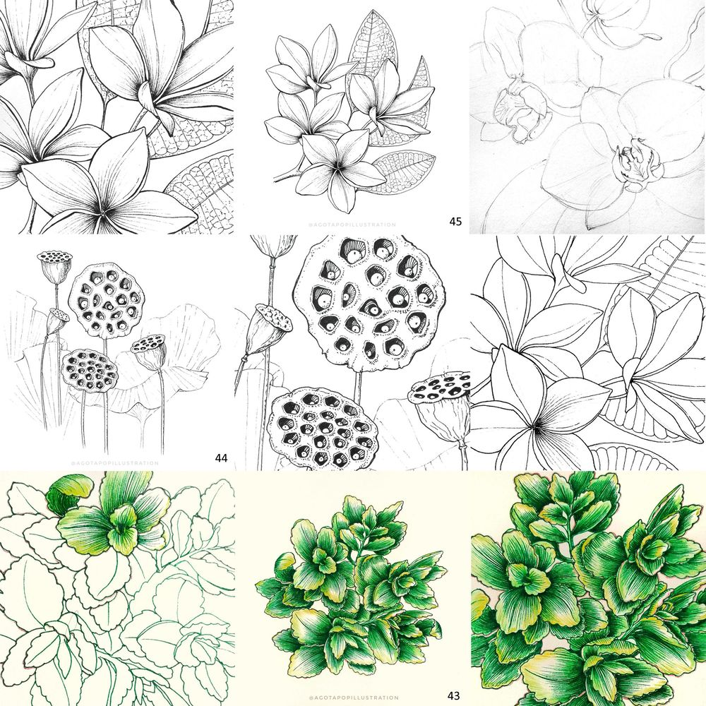 100 day of inking - Botanical illustrations - image 19 - student project