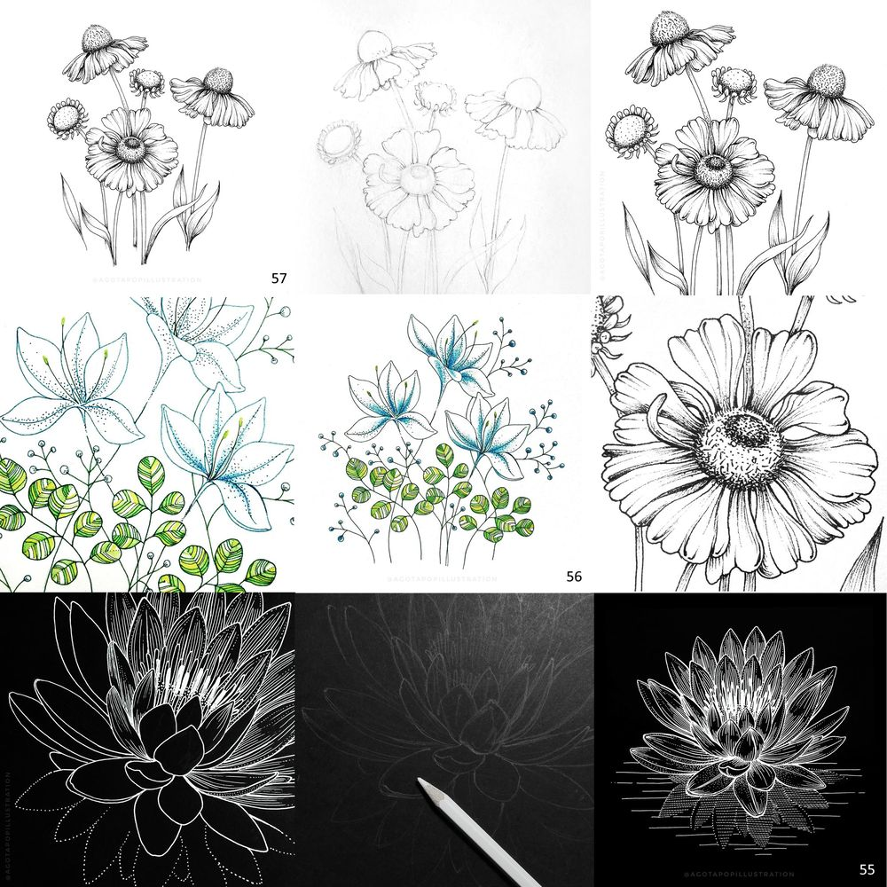 100 day of inking - Botanical illustrations - image 15 - student project