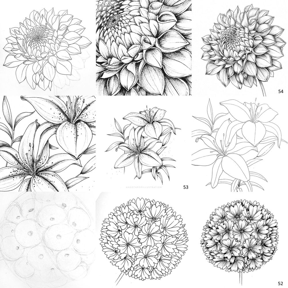 100 day of inking - Botanical illustrations - image 16 - student project