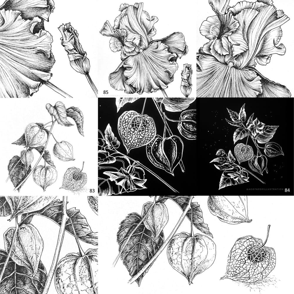100 day of inking - Botanical illustrations - image 6 - student project