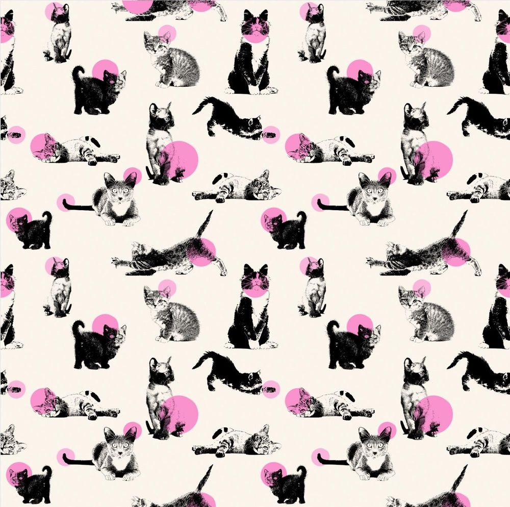Cats all over! - image 1 - student project