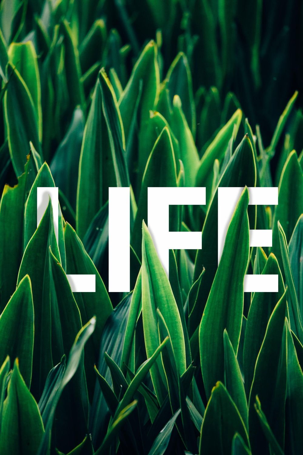 Life - image 1 - student project