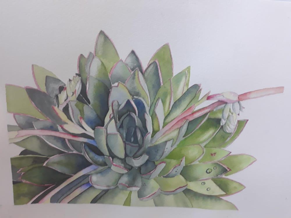 Watercolour Succulent - image 1 - student project
