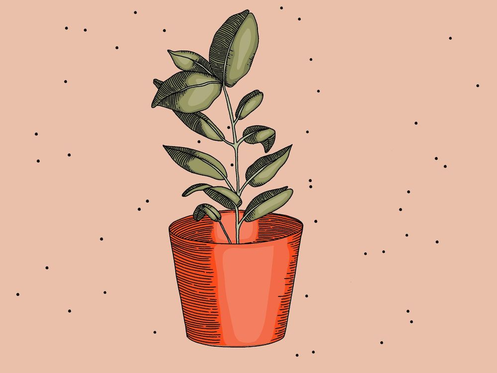 Plants - image 1 - student project
