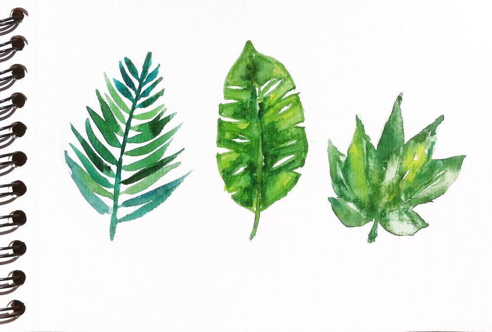 Tropical leaves frame - image 1 - student project