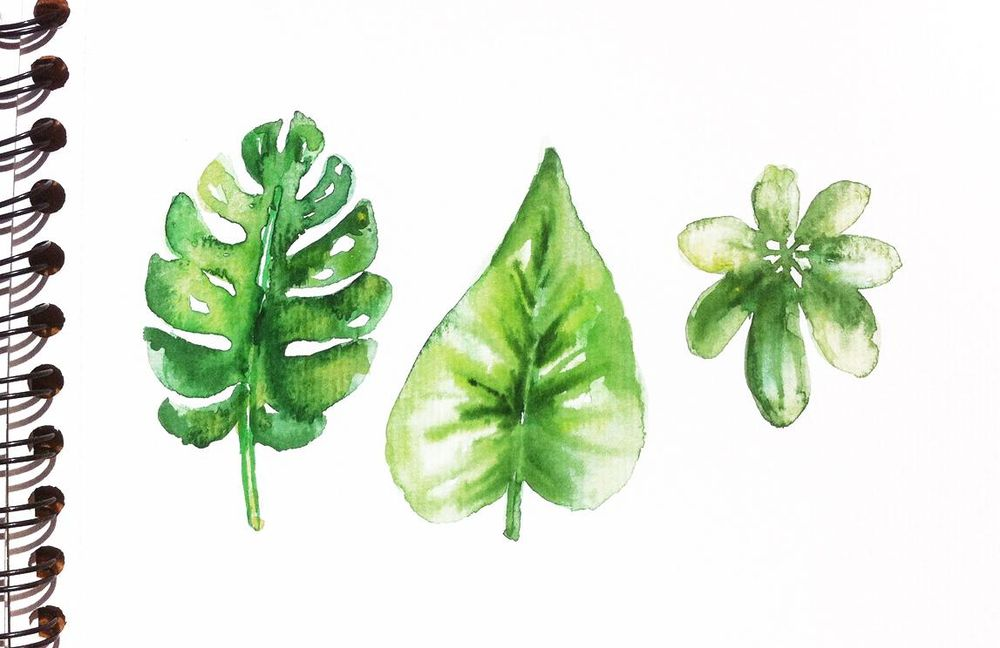 Tropical leaves frame - image 2 - student project