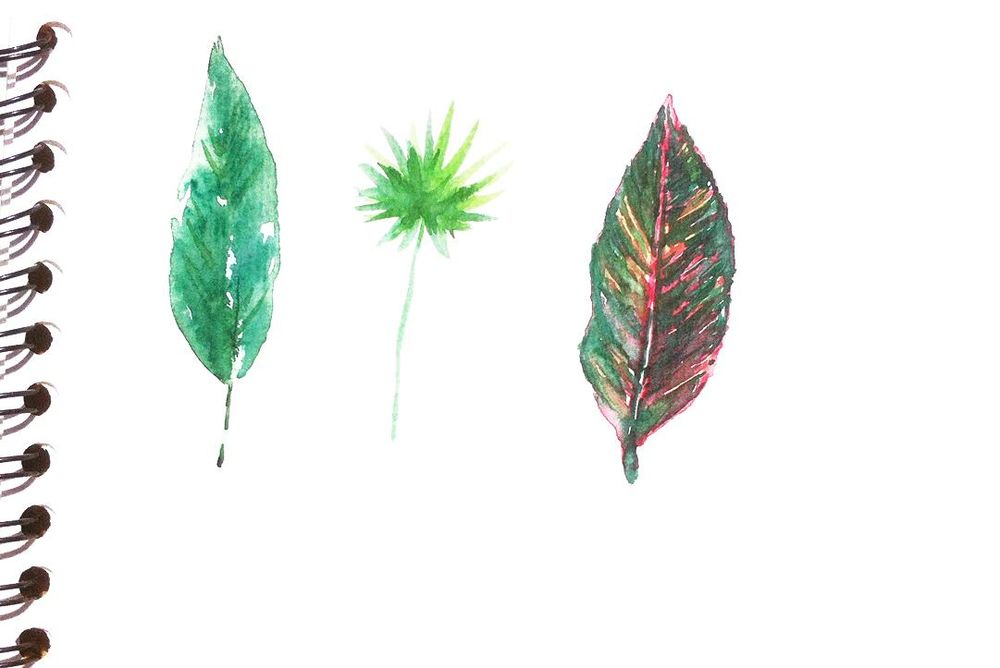 Tropical leaves frame - image 3 - student project
