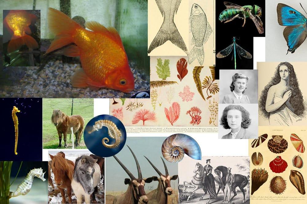 Vintage High Tea, Rockpool, Neptune's Garden - 3 Focal Print Workshop with Bonnie Christine - image 11 - student project